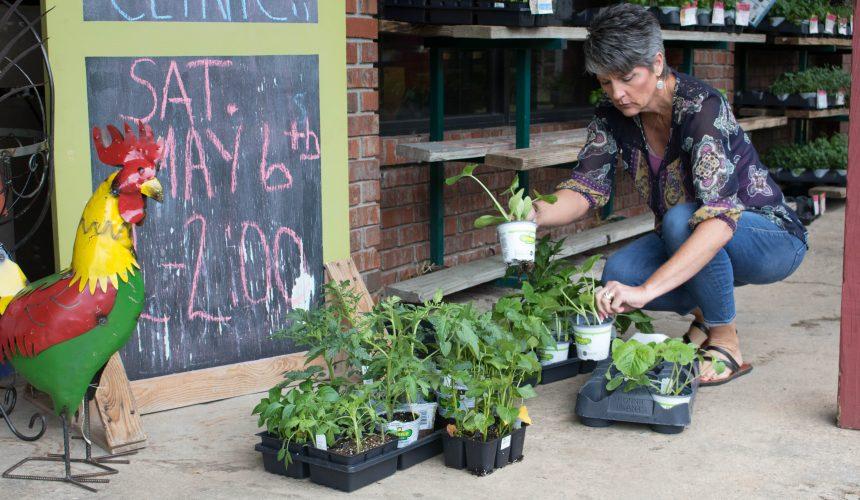 Successive Sowing: Extend Seasons & Maximize Harvest